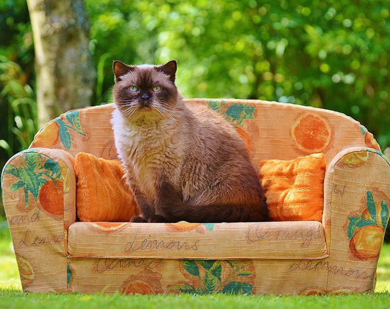 Pet's-World-Exhibition cat image