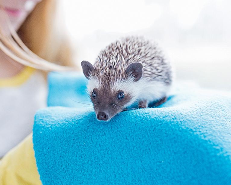 Pet's-World-Exhibition animal image