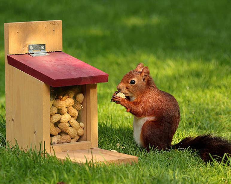 Pet's-World-Exhibition Peenut for squirrel